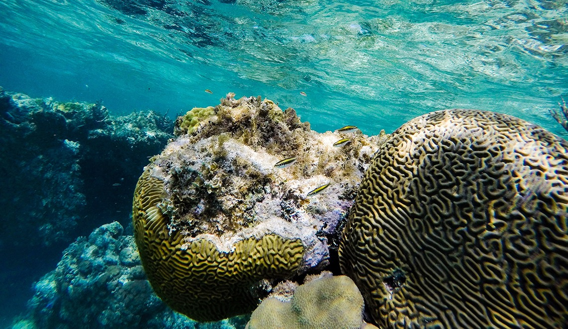 5 Great Snorkelling Spots in the BVI