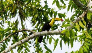 Bird Watching Cayo Belize