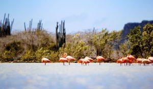 Curacao Nature