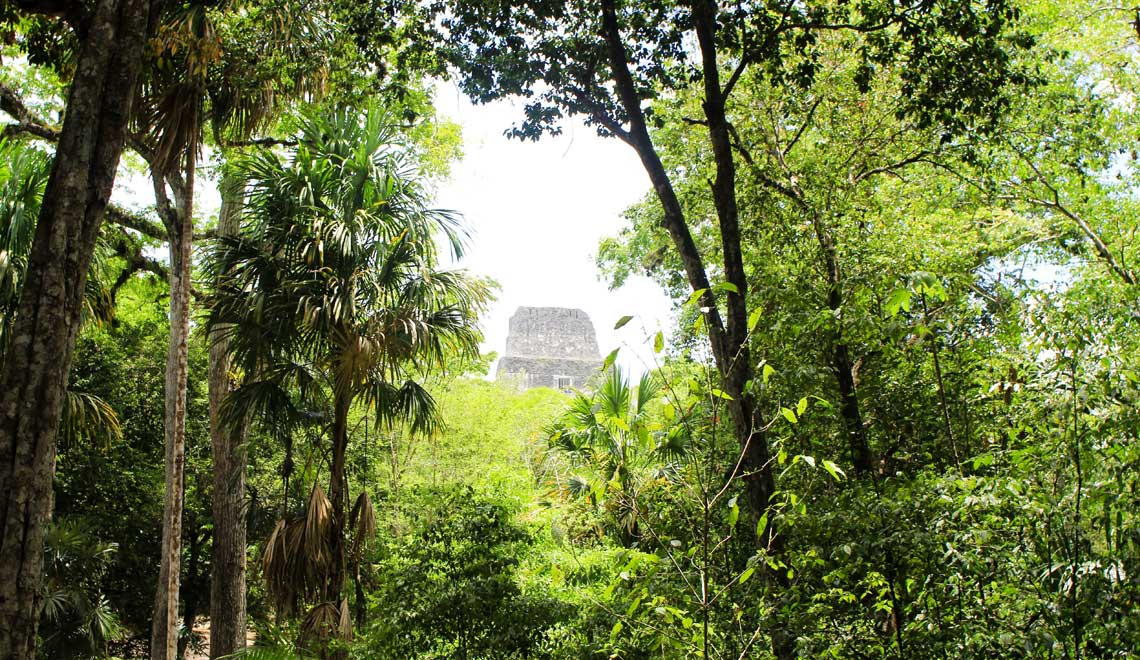 Daytrip to Tikal from Cayo Belize