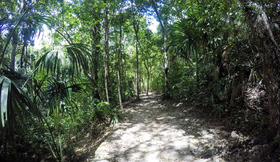 tikal-guatamala-jungle