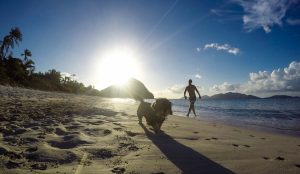 dogs-long-bay-beach-jack-tortola-bvi