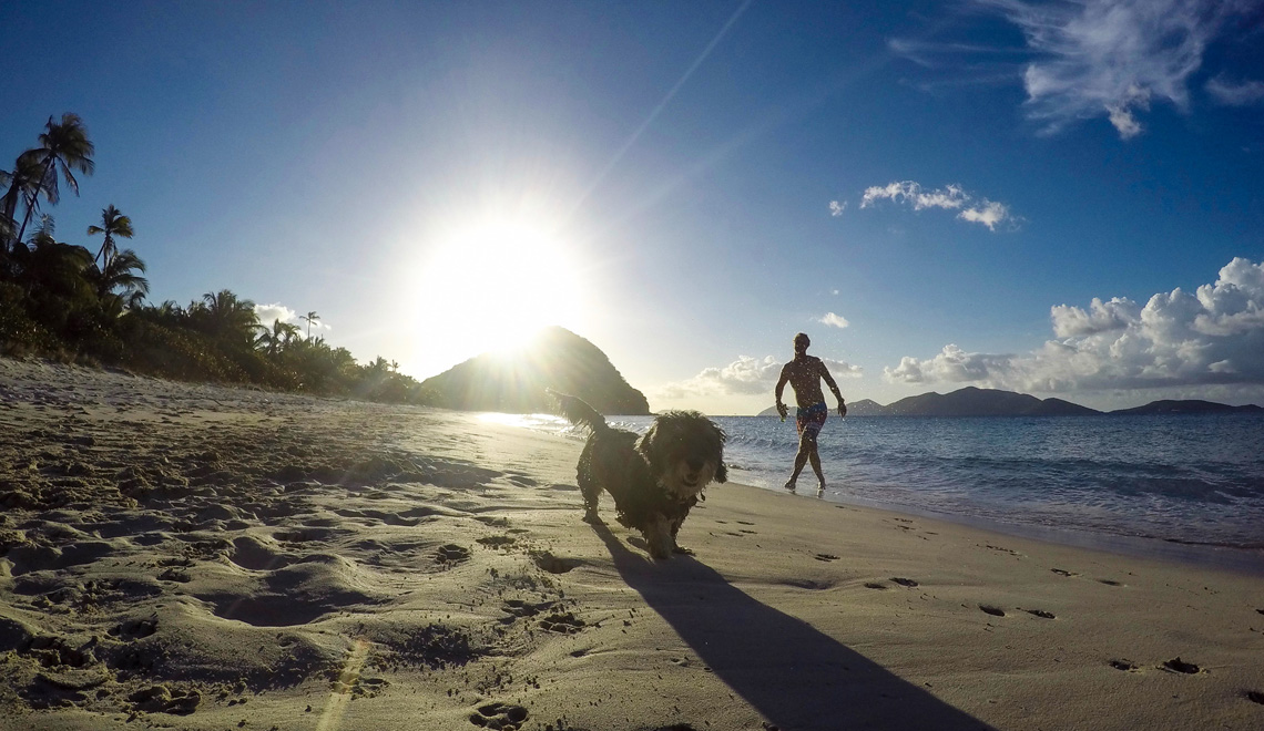 dogs-long-bay-beach-jack-tortola-bvi