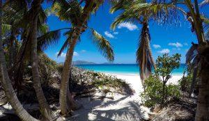 Palm tree, white sand, blue ocean