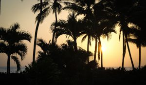 Beach with palm trees in Cabarete Dominican Republic