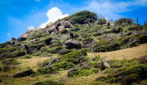 Sint Maarten Landscape Goats Cactus