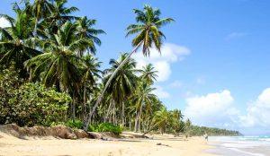 Palm lined Playa Coson in Samana
