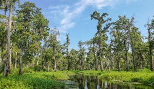 Kayak swamp tours near New Orleans