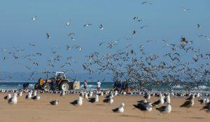 Is Peninsula de Setúbal your next vacation destination?