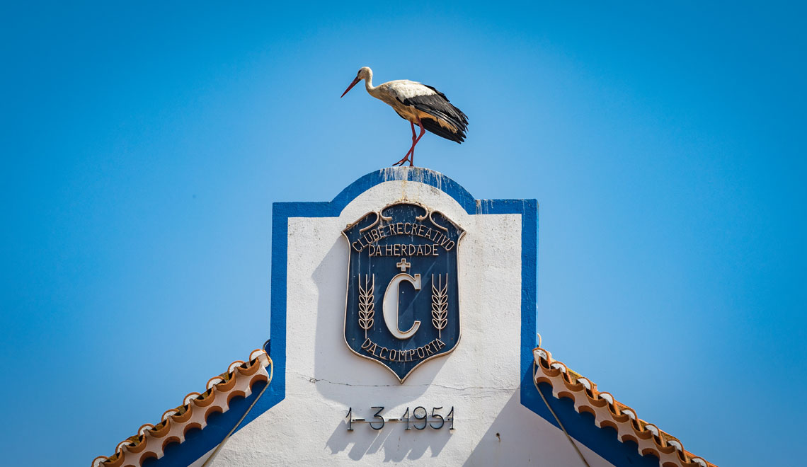 Storks in Comporta,Troia