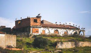 Storks in the Algarve